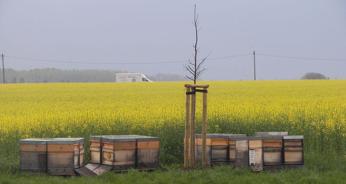 Hurra, die Bienen sind da!