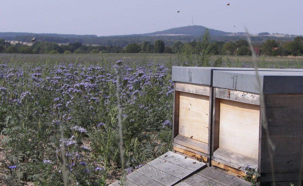 Bienenstock auf einem Feld